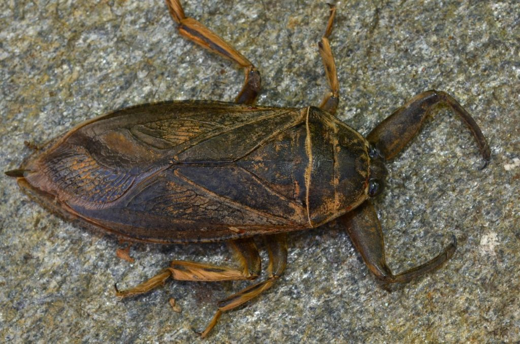 Insect of the Week - Prairie Pest Monitoring Network